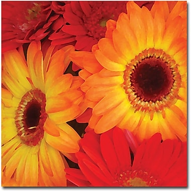 Trademark Global Amy Vangsgard in.Orange and Red Gerbersin. Canvas Art, 18in. x 18in.
