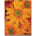 Trademark Global Amy Vangsgard in.Orange Daisiesin. Canvas Art, 18in. x 24in.