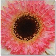 Trademark Global Amy Vangsgard Pink and Brown Gerber Center Canvas Art, 18 x 18