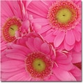 Trademark Global Amy Vangsgard in.Pink Gerber Daisiesin. Canvas Art, 24in. x 24in.