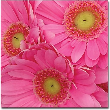 Trademark Global Amy Vangsgard in.Pink Gerber Daisiesin. Canvas Art, 18in. x 18in.