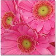 Trademark Global Amy Vangsgard Pink Gerber Daisies Canvas Art, 24 x 24