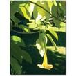 "Trademark Global Amy Vangsgard ""Singe Angel's Trumpet"" Canvas Art, 24"" x 32"""