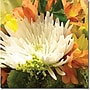 Trademark Global Amy Vangsgard Spring Flower Burst Canvas