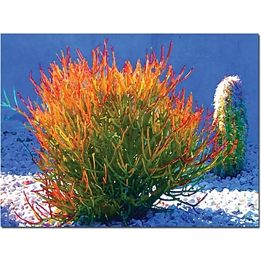 Trademark Global Amy Vangsgard in.Firesticks on Bluein. Canvas Art, 24in. x 32in.