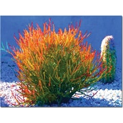 "Trademark Global Amy Vangsgard ""Firesticks on Blue"" Canvas Art, 35"" x 47"""