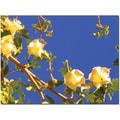 Trademark Global Amy Vangsgard in.Flowering Tree 1in. Canvas Art, 35in. x 47in.