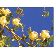 Trademark Global Amy Vangsgard Flowering Tree Canvas Art, 14 x 19