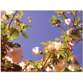Trademark Global Amy Vangsgard in.Flowering Tree IIin. Canvas Art, 24in. x 32in.
