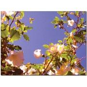"Trademark Global Amy Vangsgard ""Flowering Tree II"" Canvas Arts"