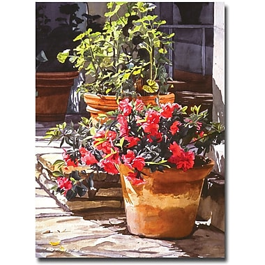 Trademark Global David Lloyd Glover in.Blossom Nichein. Canvas Art, 35in. x 47in.