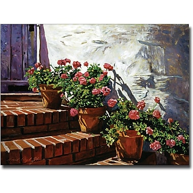 Trademark Global David Lloyd Glover in.Geranium Stepsin. Canvas Arts