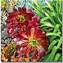 Trademark Global Amy Vangsgard Succulent Garden Canvas Art,