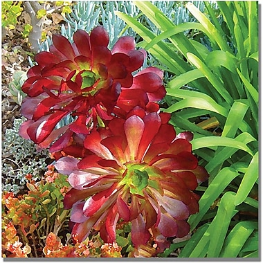 Trademark Global Amy Vangsgard in.Succulent Gardenin. Canvas Art, 18in. x 18in.