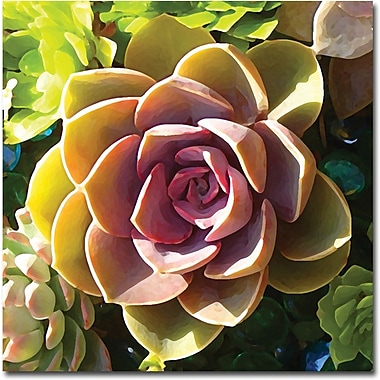 Trademark Global Amy Vangsgard in.Succulent Pond VIin. Canvas Art, 18in. x 18in.