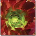 Trademark Global Amy Vangsgard in.Succulent Square Iin. Canvas Art, 24in. x 24in.