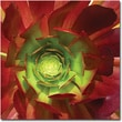 Trademark Global Amy Vangsgard in.Succulent Square Iin. Canvas Art, 18in. x 18in.