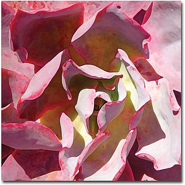 Trademark Global Amy Vangsgard in.Succulent Square IIin. Canvas Art, 18in. x 18in.