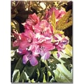 Trademark Global David Lloyd Glover in.Royal Rhododendrons Canvasin. Arts
