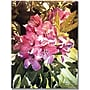 Trademark Global David Lloyd Glover Royal Rhododendrons Canvas