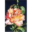 Trademark Global David Lloyd Glover in.Royal Rosein. Canvas Art, 30in. x 47in.