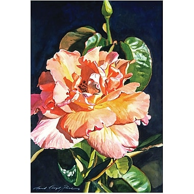 Trademark Global David Lloyd Glover in.Royal Rosein. Canvas Arts