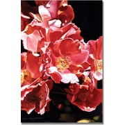 "Trademark Global David Lloyd Glover ""Wild Roses"" Canvas Art, 30"" x 47"""