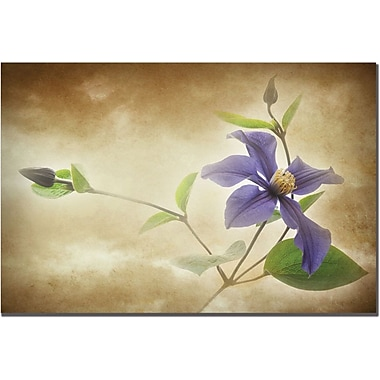 Trademark Global Philippe Sainte Laudy in.Clemantis Lamiginosein. Canvas Art, 22in. x 32in.