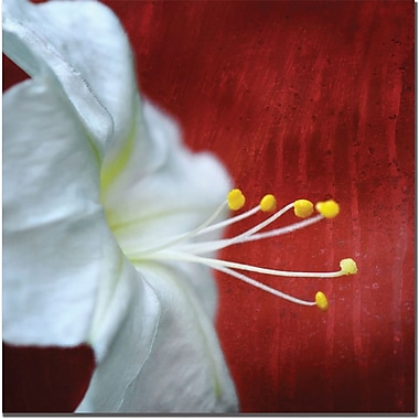 Trademark Global Philippe Sainte Laudy in.Flower for Zoein. Canvas Art, 14in. x 14in.
