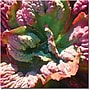 Trademark Global Amy Vangsgard Succulent Square IV Canvas