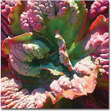 Trademark Global Amy Vangsgard in.Succulent Square IVin. Canvas Art, 18in. x 18in.