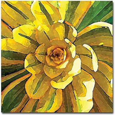 Trademark Global Amy Vangsgard in.Succulent Square VIIin. Canvas Arts