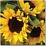 Trademark Global Amy Vangsgard Sunflowers Canvas Art, 24