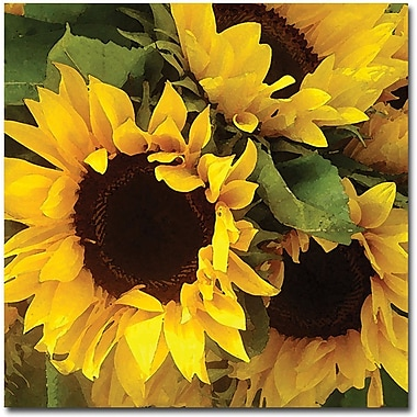 Trademark Global Amy Vangsgard in.Sunflowersin. Canvas Art, 18in. x 18in.