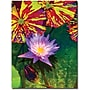 Trademark Global Amy Vangsgard Waterlily Canvas Art, 18