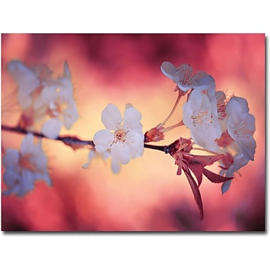 Trademark Global Philippe Sainte Laudy in.Springin. Canvas Art, 30in. x 47in.