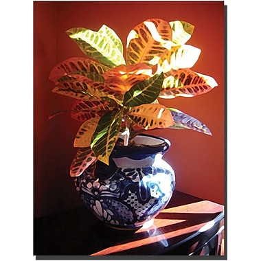 Trademark Global Amy Vangsgard in.Crotons in Talavera Potin. Canvas Art, 24in. x 32in.