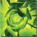 Trademark Global Amy Vangsgard in.Succulent Square Close Upin. Canvas Art, 24in. x 24in.