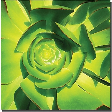 Trademark Global Amy Vangsgard in.Succulent Square Close Upin. Canvas Arts