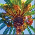 Trademark Global Amy Vangsgard in.Palm Tree Looking Upin. Canvas Arts