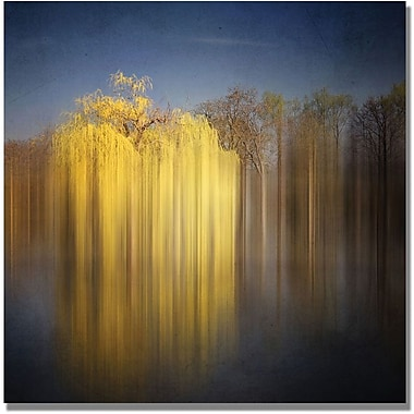 Trademark Global Philippe Sainte Laudy in.Weeping Willowin. Canvas Arts