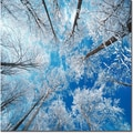 Trademark Global Philippe Sainte Laudy in.Frozen Skyin. Canvas Art, 14in. x 14in.
