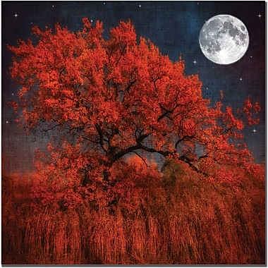 Trademark Global Philippe Sainte Laudy in.Halloween Colorin. Canvas Art, 24in. x 24in.