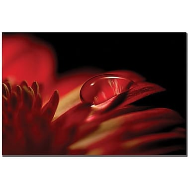 Trademark Global Philippe Sainte Laudy in.Red Dropin. Canvas Art, 30in. x 47in.