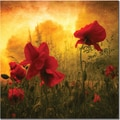 Trademark Global Philippe Sainte Laudy in.Red for Lovein. Canvas Art, 18in. x 18in.