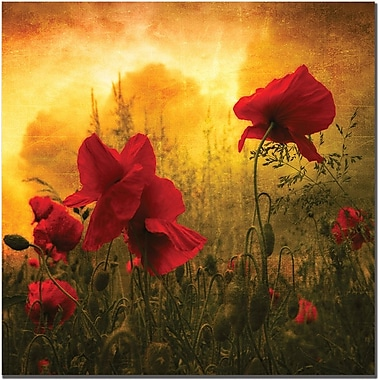 Trademark Global Philippe Sainte Laudy in.Red for Lovein. Canvas Art, 24in. x 24in.