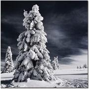 Trademark Global Philippe Sainte Laudy White Ink Canvas Art, 14 x 14