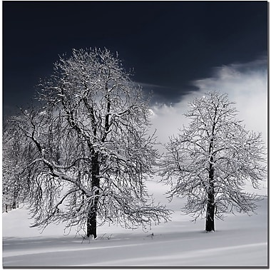 Trademark Global Philippe Sainte Laudy in.White Naturein. Canvas Art, 35in. x 35in.