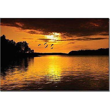 Trademark Global Philippe Sainte Laudy in.White Flyin. Canvas Art, 14in. x 19in.