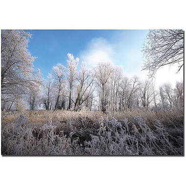 Trademark Global Philippe Sainte Laudy in.Blue Winterin. Canvas Art, 30in. x 47in.
